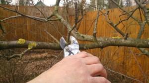 Обрезка плодовых деревьев в Новомосковском районе