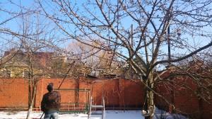 Обрезка плодовых деревьев в Одинцовском районе