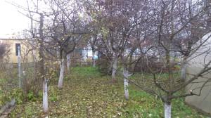 Обрезка плодовых деревьев в Раменском районе