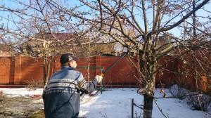 Обрезка плодовых деревьев в Щёлковском районе