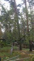 Услуги по обрезке плодовых деревьев в Новомосковском