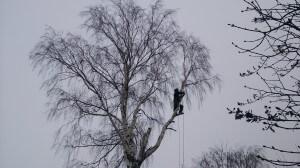 Альпинист спиливает дерево во дворе