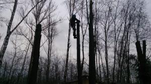 Куда звонить, чтобы альпинисты спилили дерево?