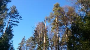 Обращайтесь к нам, чтобы спилить дерево частями