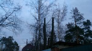 Спилить дерево по звонку