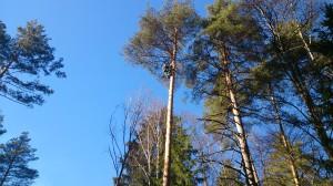 Спилить дерево возле дома под окном