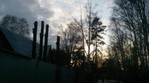 Способы спиливания сухого дерева специалистами