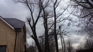 Профессиональные услуги по обрезке деревьев