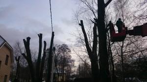 Обрезка деревьев при помощи вышке