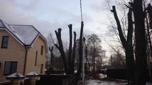 Санитарная обрезка деревьев и кустарников