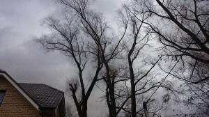 Санитарная обрезка деревьев на вышке