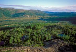 Какую площадь занимают леса на Земле? Самый большой лес