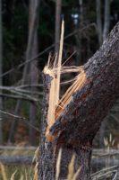 В Москве дерево стало причиной повреждения авто
