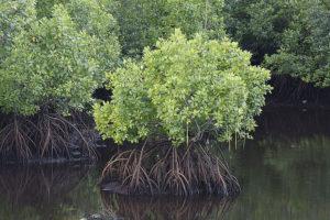 Дерево, произрастающее в воде