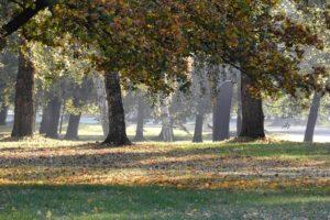 В столице применили новую технологию по уходу за деревьями
