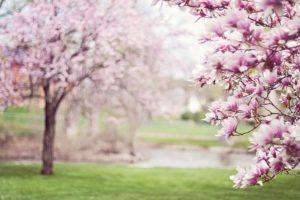 5 интересных фактов о деревьях