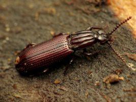 Как жуки-короеды убивают ваши деревья